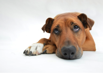 6 Key Signs Your Dog's Not Feeling Well
