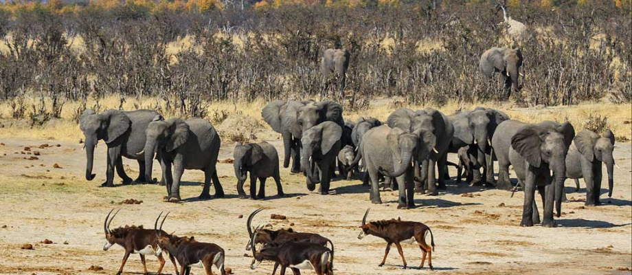 Why You Should Visit Hwange National Park